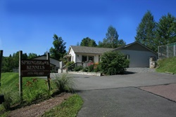 springbrook kennels dog friendly care in the poconos, pennsylvania, pet friendly boarding in the poconos, pennsylvania